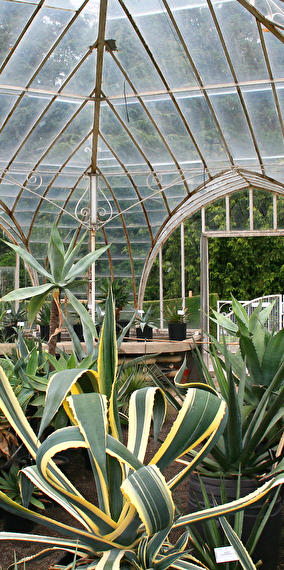 The largest greenhouse in Europe