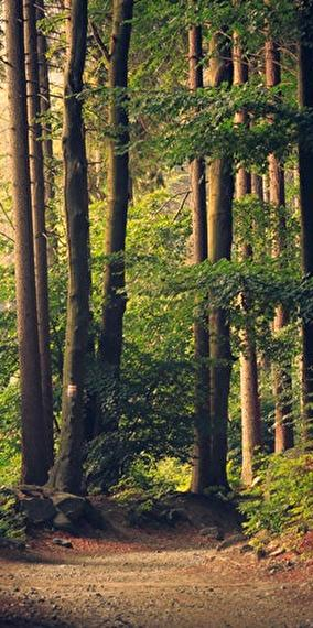 Entends-tu les arbres chanter?