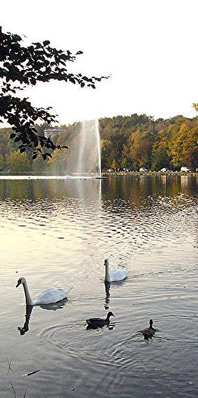 A splash in the lake