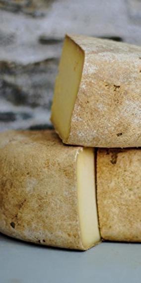 Brie ou Brebis, mon coeur balance