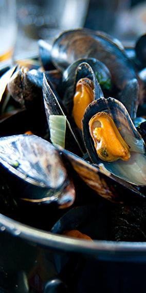 Salt mussels!