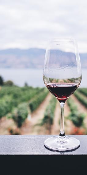 ANNULE - Dégustation de vins